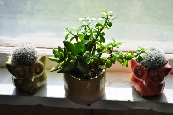 Succulents with other cacti